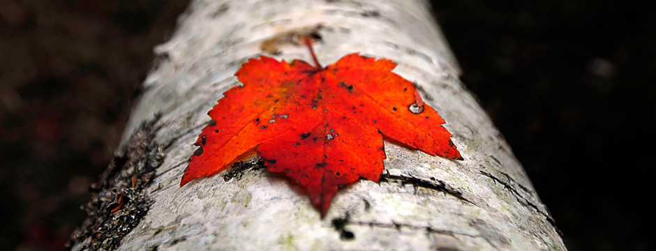 Поделки своими руками на тему осень - Делаем все своими руками.